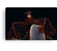 Orang-outang Crab  Canvas Print