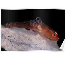 Goby With Parasite Poster