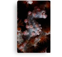 Pygmy Seahorse Canvas Print