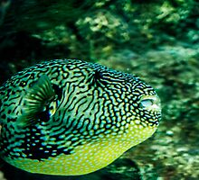 Tropical Parrot Fish by Moonlake