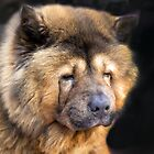 A Greek Chow Chow  by John44
