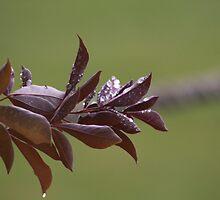 Purple Rain Pt.1 by Stuart Daddow Photography