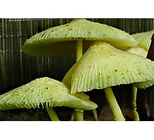 Little Umbrellas Photographic Print
