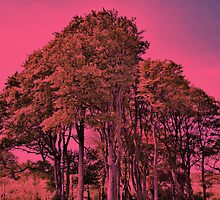 Pink Forest by CHINOIMAGES