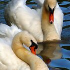 Swans by M. Kuypers