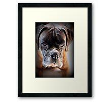 Go Ahead .... Make My Day  ~ Boxer Dog Series ~ Framed Print