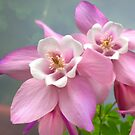 Pink Flowers by Forfarlass
