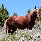 Majestic Stallion,Virginia City Highlands,Virginia City Nevada USA by Anthony & Nancy  Leake