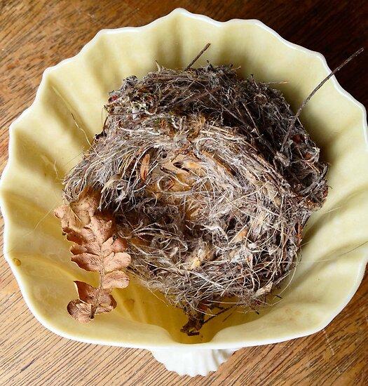 Nest in Porcelain Shell by Barbara Wyeth