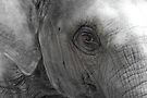 Elephant Baby Eyes by Deanna Roberts Think in Pictures