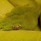 Green Eye by Dave Cauchi