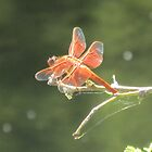 Flame Skimmer Dragonfly by Ingasi