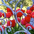 Tulips and Gate by John Butler