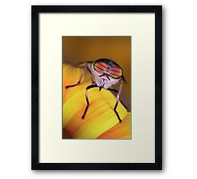 Cool shades Framed Print