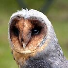 Black Barn Owl by Paul Dean
