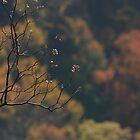 Fall at Table Rock by kinokofairy