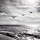Time to fly home by mjamil81