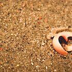 Shell Heart. by Lindsay Osborne