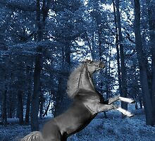 ๑۩۞۩๑BLUE WONDER HORSE CARD/PICTURE ๑۩۞۩๑ by ╰⊰✿ℒᵒᶹᵉ Bonita✿⊱╮ Lalonde✿⊱╮