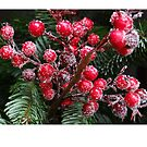 Christmas card with Christmas berries in snow by Cheryl Hall