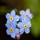 Blue Flowers by emilyx93