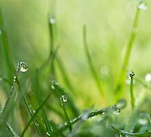 Springtime dewdrops on grass by ruthjulia