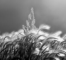 Light Breeze by Bob Larson