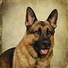 German Shepherd Portrait by Sandy Keeton