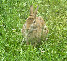 Bunny in my Backyard by lisa  gorman