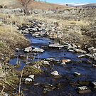 Creek in the Desert,Reno Nevada USA by Anthony & Nancy  Leake