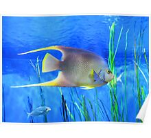 Into Blue - Tropical Fish by Sharon Cummings Poster