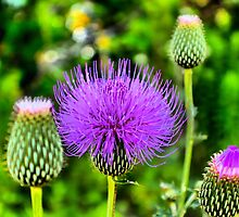 Totally Thistle by aprilann