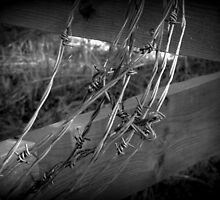 Barbed Wire - British Columbia Canada by Natasha Wagar