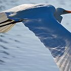 Egret in Flight by D-GaP