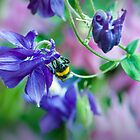headfirst bumblebee by dirk hinz