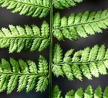 Fern III by EelhsaM