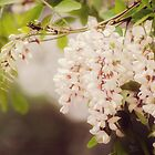 Popcorn Tree by KBritt