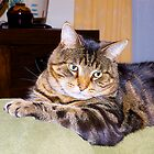 My tabby Jimmy Cat, His favourite spot.  by johnrf