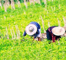 Tending the crops  by areyarey