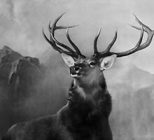 Head Deer In Black And White by 104paul