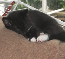 Kitten Asleep -(190613)- Digital photo/Fujifilm FinePix AX350 by paulramnora