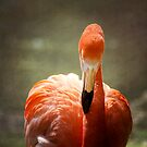 Flamingo Glow by KBritt