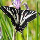 Pale Tiger Swallowtail Butterfly - iPhone Case by © Betty E Duncan ~ Blue Mountain Blessings Photography