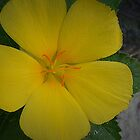 Yellow Flower by PhosGraphe