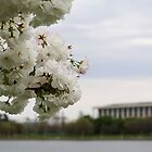 Blossoms of Canberra by NinaJoan