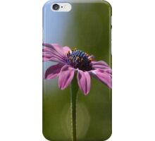 Macro Shot Of A Purple Osteospermum  iPhone Case/Skin