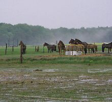 HORSE FARM ROSTOCK GERMANY by konkan