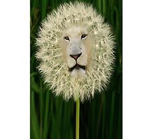 ☝ ☞DANDELION IPHONE CASE ~DANDY LION IPHONE CASE..LOL ☝ ☞ by ╰⊰✿ℒᵒᶹᵉ Bonita✿⊱╮ Lalonde✿⊱╮