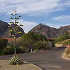 Chisos Mountain Lodge - Big Bend National Park in June by seymourpics