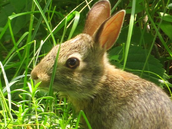 Baby Bunny by lorilee